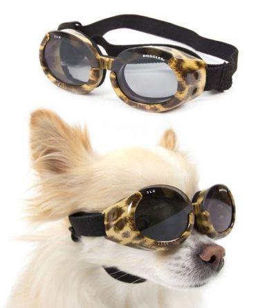 Conheça os Óculos de Sol para Cães 6 - Dicas de Moda ebc13922de